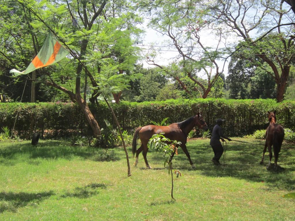Paarden in de Voortuin