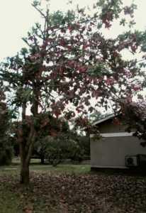 Boom met vallende rode bladeren